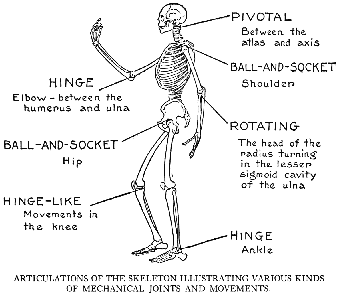 Practical Art Anatomy - E. G. Lutz